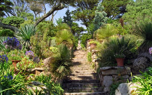 Tresco Abbey Gardens, Scilly Isles, UK | A superb Sub-Tropical G